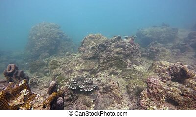 Tropical Fish and Live Coral in the Wild - Peaceful clip of...