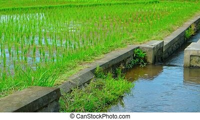 """Engineered irrigation Canal System on a Rice Plantation,..."