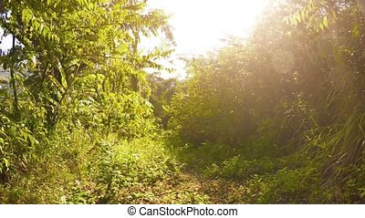Trekking along a Tropical Nature Trail on a Sunny Morning -...