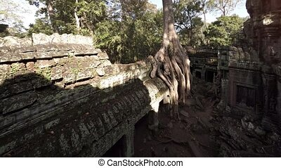 Enormous Tree Roots Sprouting from Ancient Cambodian Temple...