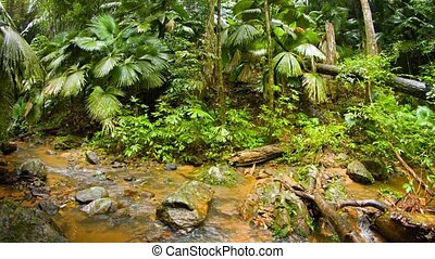 """Natural Stream in a Jungle, with Sound"" - ""Water flows..."
