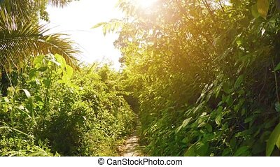 Hiking along a Tropical Nature Trail on a Sunny Morning....