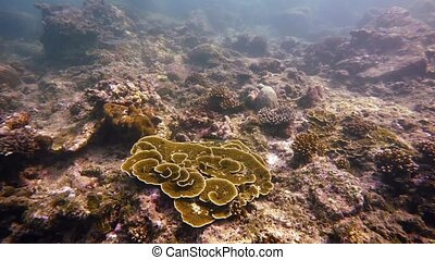Tropical Ocean Fish Swimming around Live Coral in the Wild....