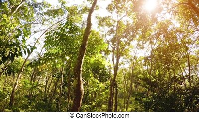 Sunshine Peaking through Trees in a Tropical Wilderness Area...