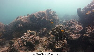 Tropical Fish and Live Coral in their Native Habitat -...