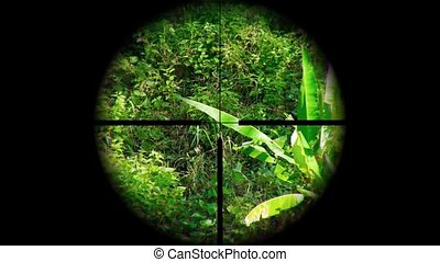 Jungle Nature Trail through the Crosshairs - View of a...