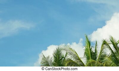 Tops of tropical palm trees against the sky with clouds