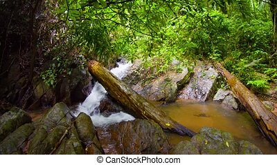 Stream in tropical forest. Rainy day. FullHD footage
