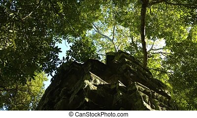 Mature Trees Provide Shade over an Ancient Temple Ruin -...