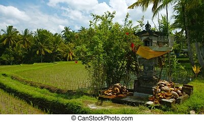 """Primitive altar at the edge of a rice field. Indonesia,..."