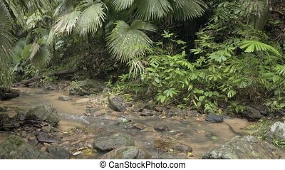 Palms and other tropical trees in a rainforest wilderness...