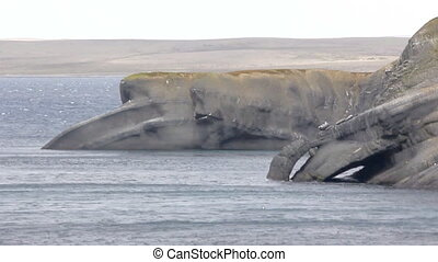 The Cape whale in the Barents sea, Novaya Zemlya...