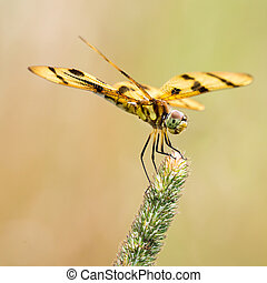 Halloween Pennant IV - A Profile Portrait of a Perching...