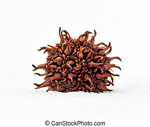 Sweet Gum Seed Pod  - A sweet Gum Seed Pod in the Snow