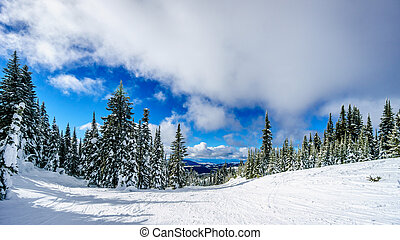 Snow Covered Tress in the High Alpine at Sun Peaks Village...