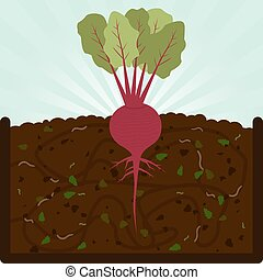 Planting beet and compost - Planting beet Composting process...