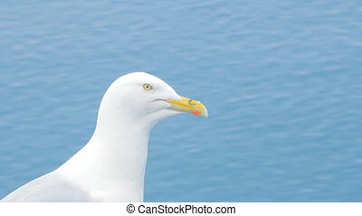 Portrait of Seagull Jonathan Livingston Seagull. Arctic -...