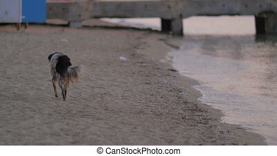 Dirty Homeless Stray Dog on the Beach - Dirty homeless stray...