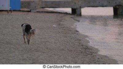 Dirty Homeless Stray Dog on the Beach - Dirty homeless stray...