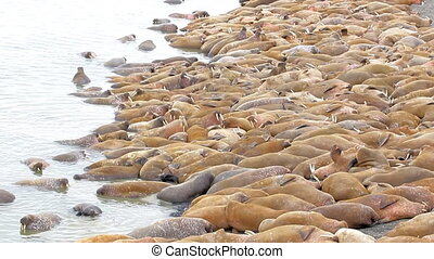 Incredible picture - sleeping on sand big bodies - Rookery:...