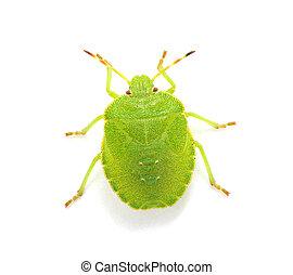 verde, protector, bicho,