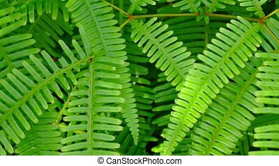 """Closeup of Healthy, Green Fern Leaves"" - ""Closeup of the..."