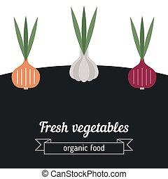 Onion and garlic vegetables illustr