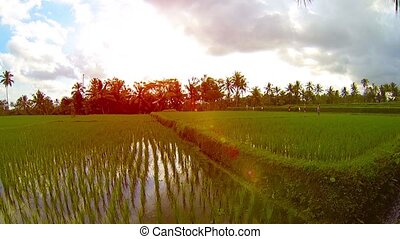 Earthen Corner Wall of a Rice Paddy in Southeast Asia