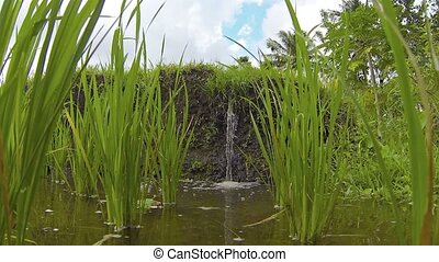 Water Tumbling over an Earthen Dam into a Rice Paddy -...