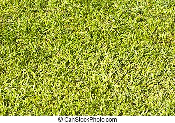 A close up of green grass