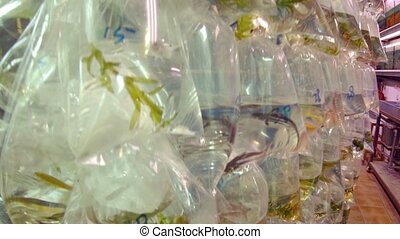 Tropical Fish Displayed in Plastic Bags at a Pet Shop -...