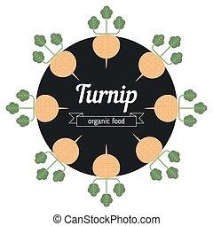 Turnip vegetables illustration.