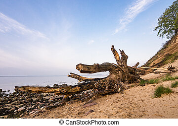 Trunk on shore of the Baltic Sea