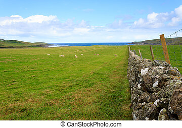 Stone wall in Scottish countryside - Scottish countryside,...