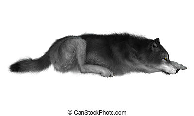 3D Illustration Gray Wolf on White - 3D Illustration of a...