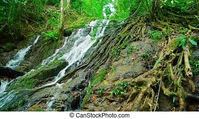 """Tropical Waterfall Flowing over Rocks and amongst Tree Roots, with Sound"""