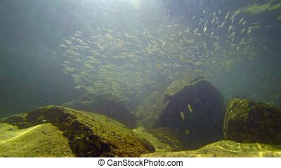 quot;School of Tiny, Tropical, Baby Fish in Shallow...