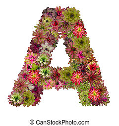 letter A made from bromeliad flowers isolated on white...
