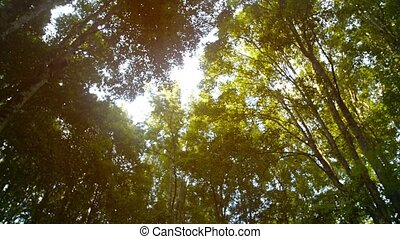 """Sun Filtering through Tree Branches and Leaves. Tropical..."