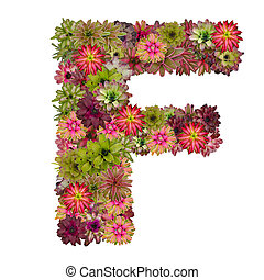 letter F made from bromeliad flowers isolated on white...