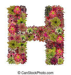 letter H made from bromeliad flowers isolated on white...