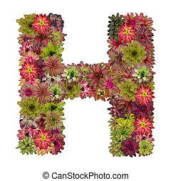 carta, H, hecho, De, Bromeliad, flores, aislado, en, blanco,...