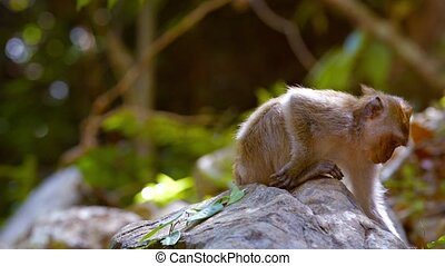 Abstract Timelapse Video of a Monkey Sitting on a Rock -...