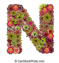 letter N made from bromeliad flowers isolated on white...
