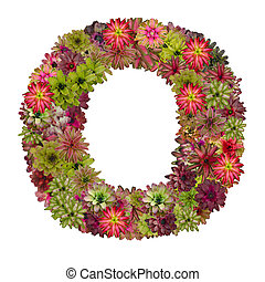 letter O made from bromeliad flowers isolated on white...