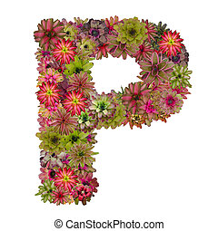 letter P made from bromeliad flowers isolated on white...