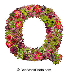 letter Q made from bromeliad flowers isolated on white...