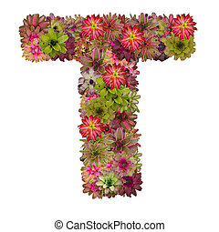 letter T made from bromeliad flowers isolated on white...