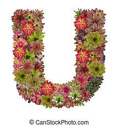 carta, U, hecho, De, Bromeliad, flores, aislado, en, blanco,...
