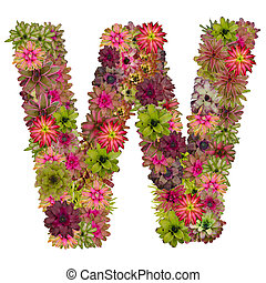 letter W made from bromeliad flowers isolated on white...
